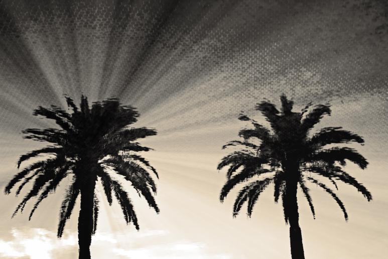Palms & Pool